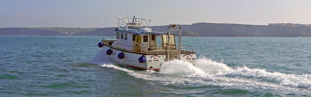 Sea safaris on the Atlantic Diver